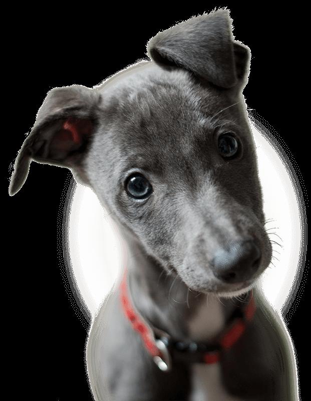 Der kleine Welpe liebt Black Canyon Hundefutter